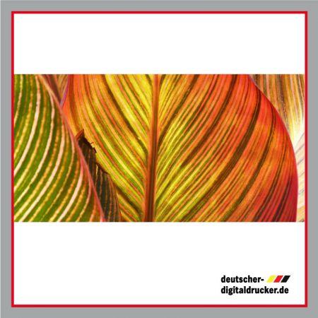 Sichtschutz - Trennwand - Trennplane - Motivplane - Terrassengitter, Blätter