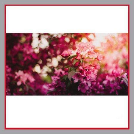 Sichtschutz Blumen